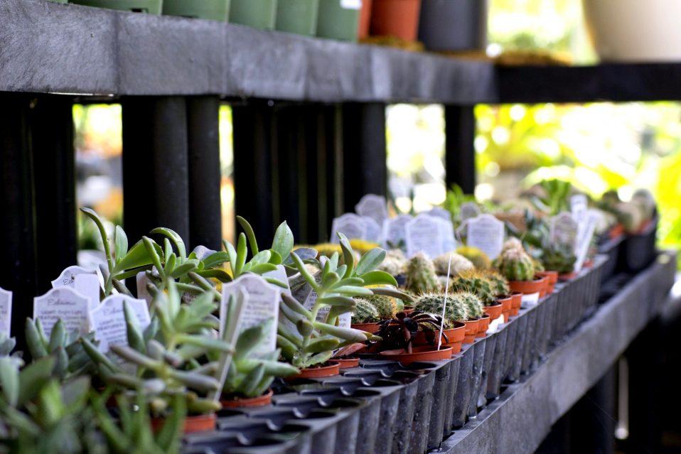 Cactus Succulents Miami