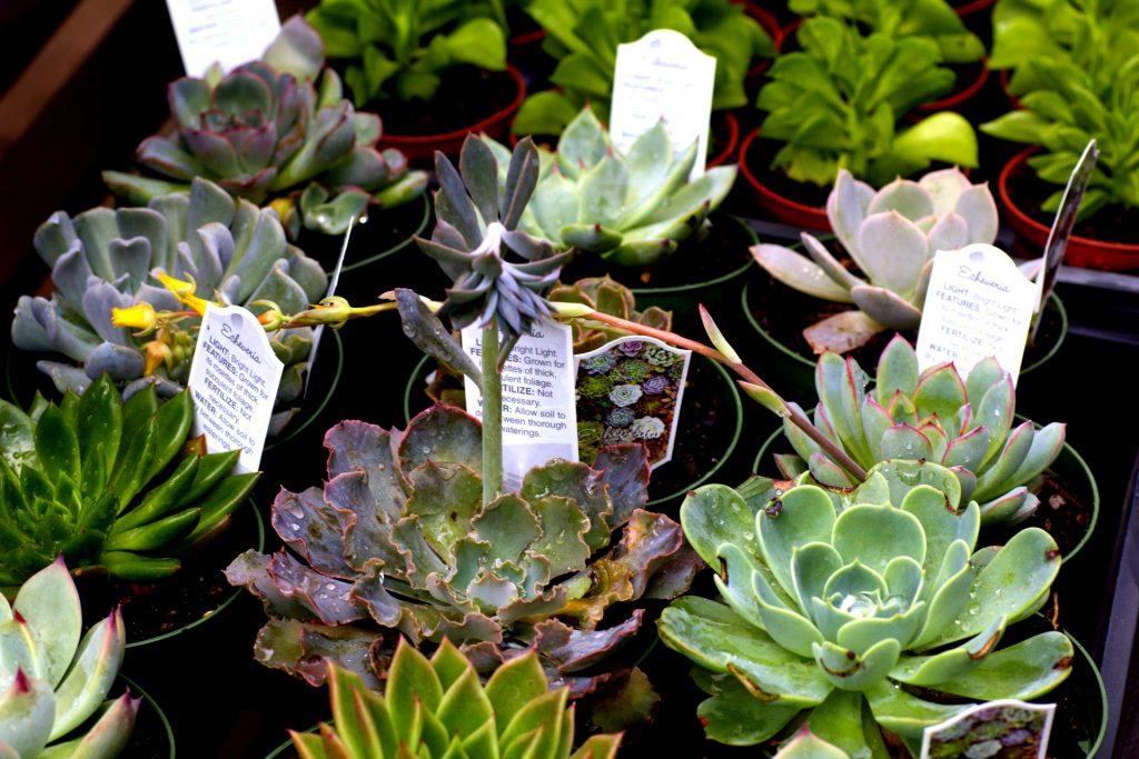 Succulents Miami