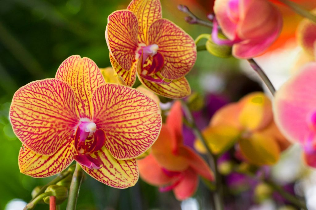 Orchids in Miami