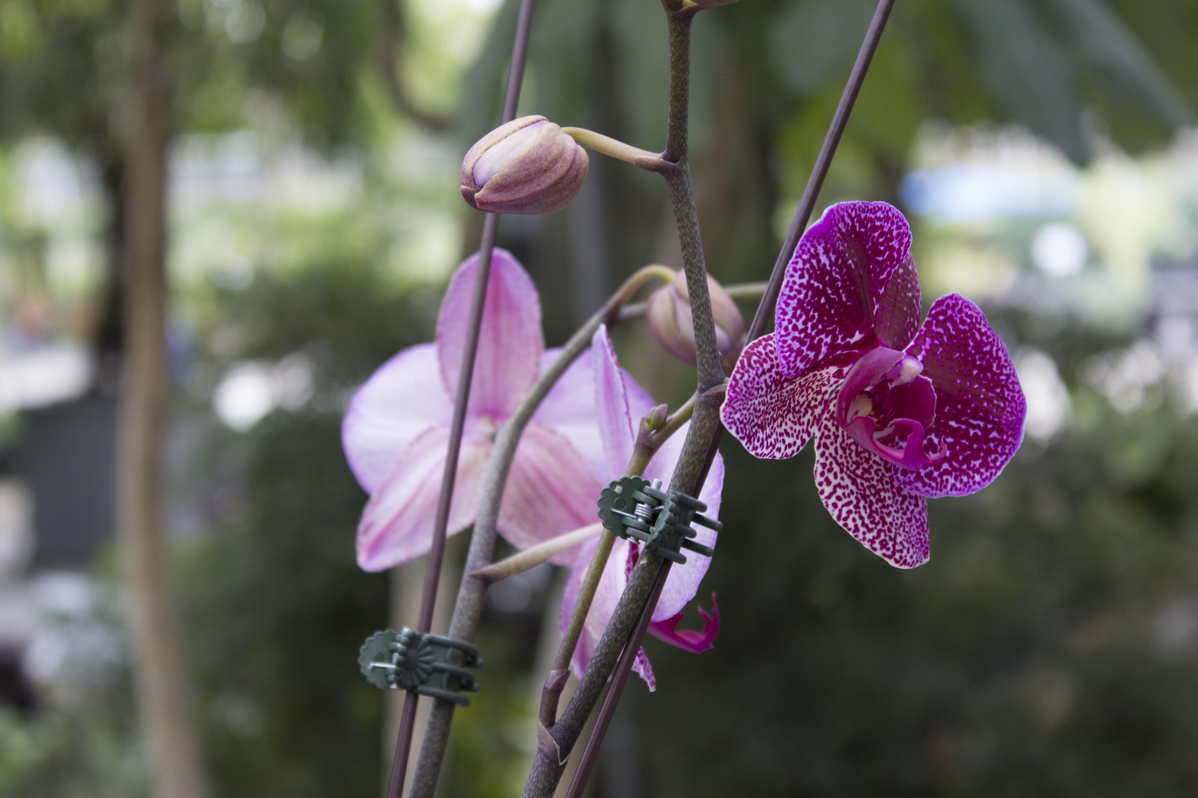 Purple Orchids Miami