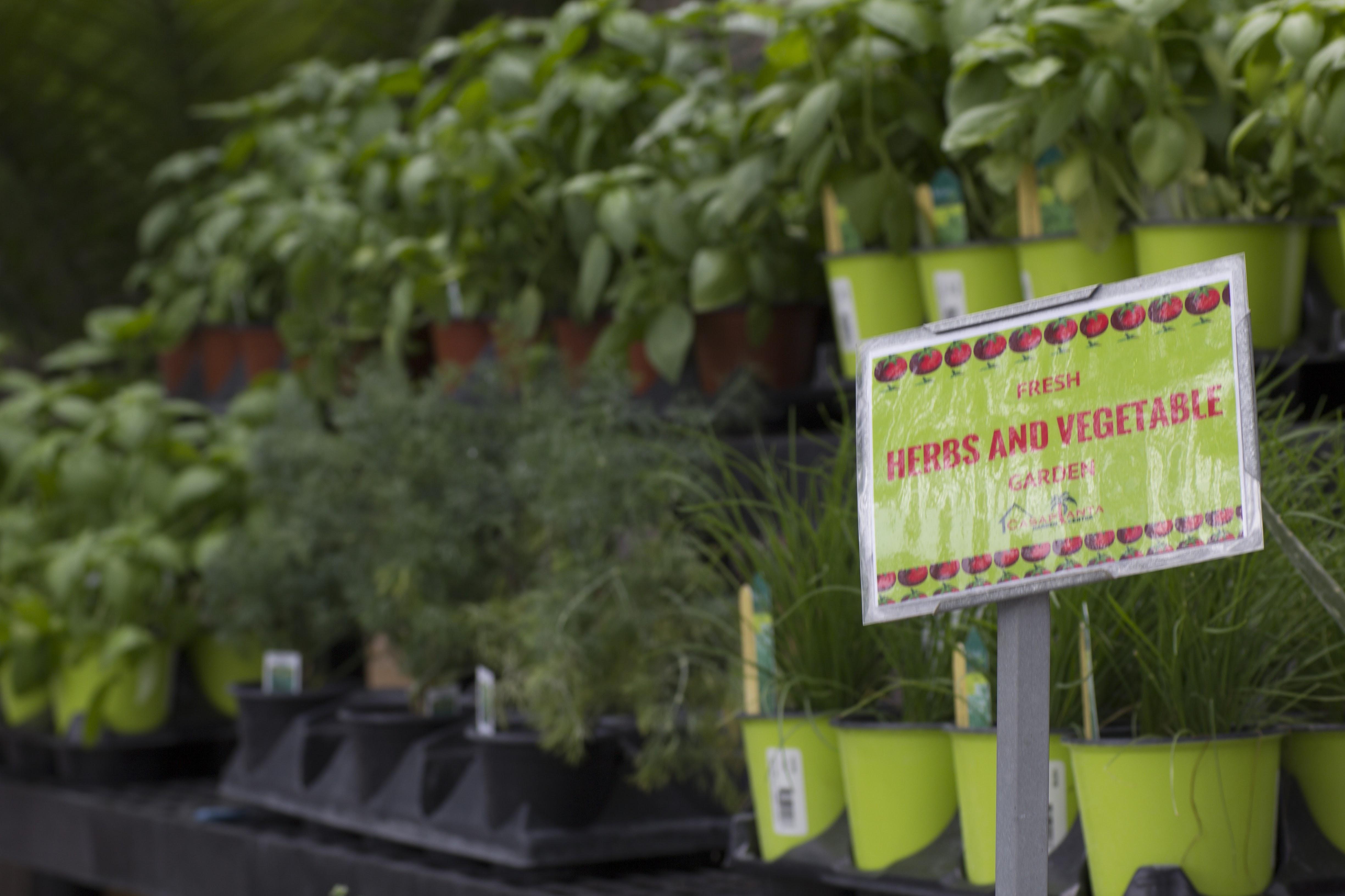 Herb Garden Miami